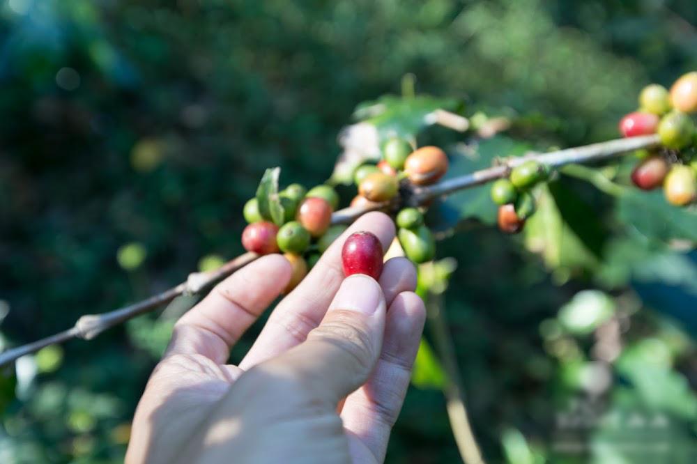 Ecologic Coffee